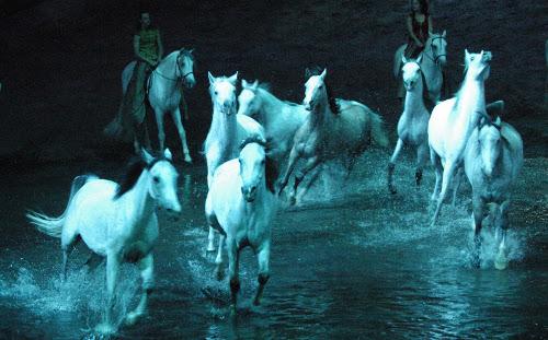 horses-500