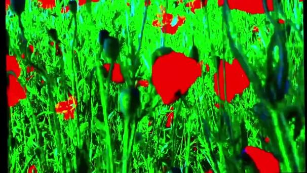 godard-flowers