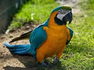 Monty Pythons Dead Parrot Sketch Artsmeme